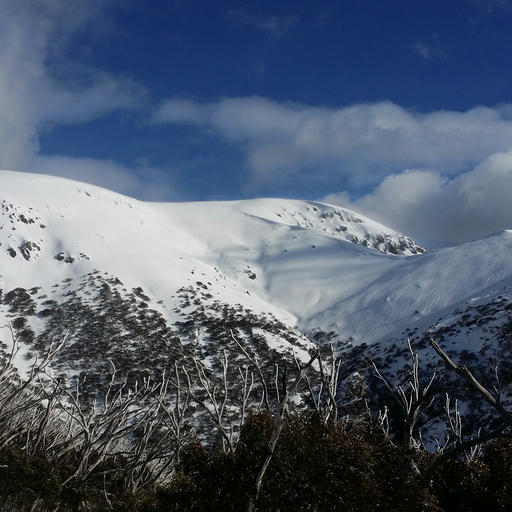 Bogong in August