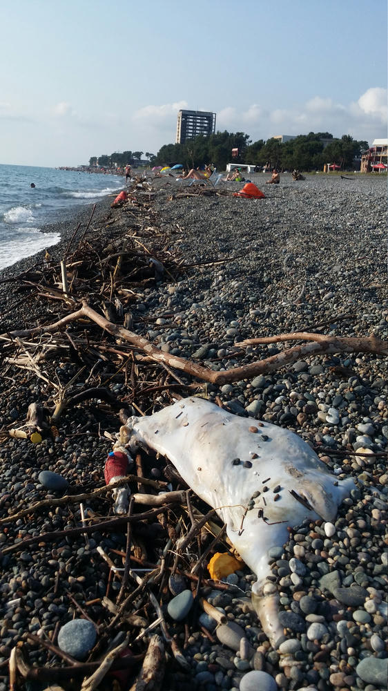 Trash on the beach in Kobuleti. Dead pig included!